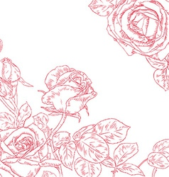 Beautiful Rose vector image
