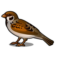 brown sparrow isolated on a white background vector image