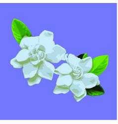 gardenia vector image