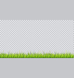 grass border on transparent vector image