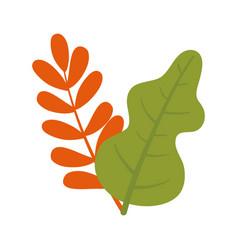 leaf foliage vegetation nature botanical isolated vector image