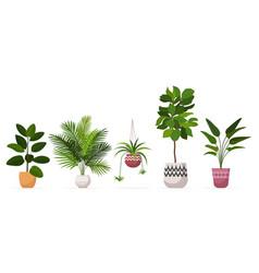 set decorative houseplants planted in ceramic pots vector image