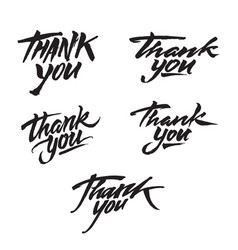 thank you modern brush calligraphy vector image