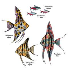 colorful drawing aquarium fishes set vector image