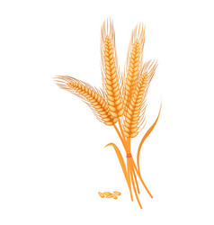 Ripe golden wheat grains of which produce bread vector