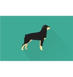 rottweiler icon vector image