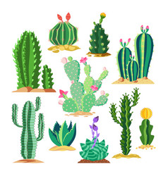 set wildlife cactus or succulent plant vector image