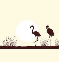silhouette of flamingo beauty scenery vector image