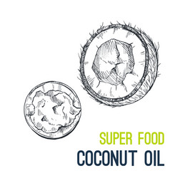 Coconut oil super food hand drawn sketch vector
