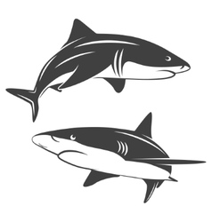 Stylized two sharks vector image
