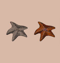 starfish hand drawn stylized vector image vector image