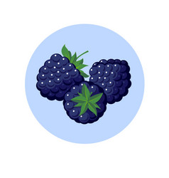 Blackberry berries in blue circle vector