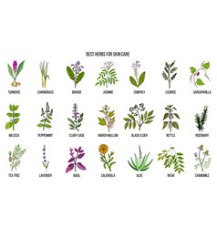 Collection of best herbs for skin care vector