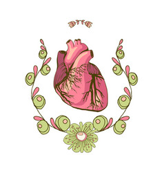 Drawing of the heart anatomical vector