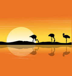 Riverbank scene with silhouette flamingo at sunset vector