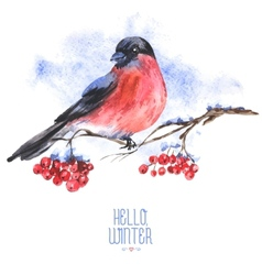 Winter Watercolor Background with Bullfinches vector image