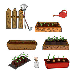 Wooden boxes with seedlings of young plants and vector