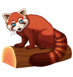 Red panda vector image vector image