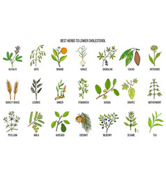 Collection of best herbs for lower cholesterol vector