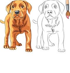 Coloring Book of Puppy dog Labrador vector image vector image