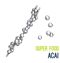 acai super food hand drawn sketch vector image