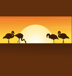 at sunset flamingo scene silhouettes vector image