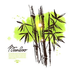Background with hand drawn sketch bamboo vector