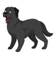 Black labrador icon cartoon style vector
