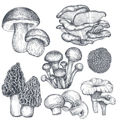 collection hand drawn mushrooms in vector image