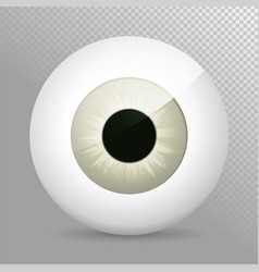 eye gray realistic 3d eyeball irispupil icon vector image