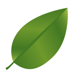 Realistic green leaf with branch nature icon vector