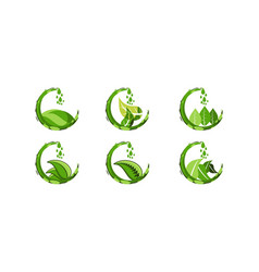 set drop green juice water and leaf food healthy vector image