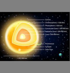 Sun structure diagram vector