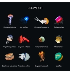Jellyfish set in flat style design vector image