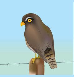 Eurasian sparrow-hawk vector
