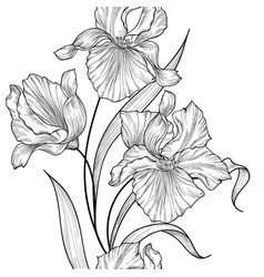 Floral seamless pattern flower iris engraving vector