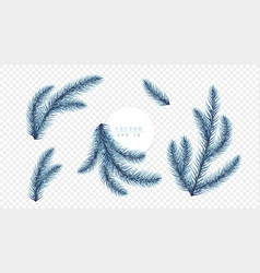 Realistic blue christmas tree branches isolated on vector