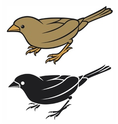 Sparrow - small bird vector