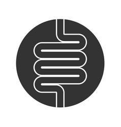 intestine in circle vector image