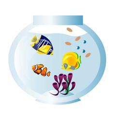 different fish in aquarium vector image vector image