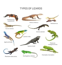 Lizards set in flat style design Different vector image