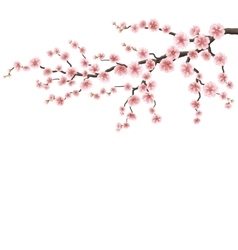 Branch of a blossoming cherry tree EPS 10 vector image