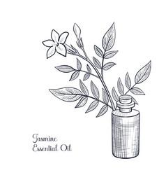 Drawing jasmine essential oil vector