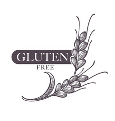gluten free products poster with ear of wheat vector image