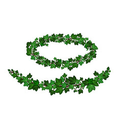 green ivy wreath ivy leaves crown garlands vector image