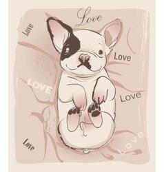 little cute bulldog vector image