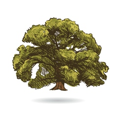 Tree drawing isolated vector image