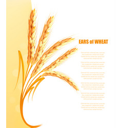 yellow background with ears wheat vector image