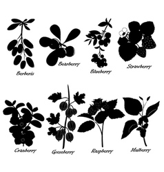 Basic Berries Collection vector image vector image