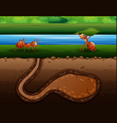Ants cartoon crawling back to hole vector